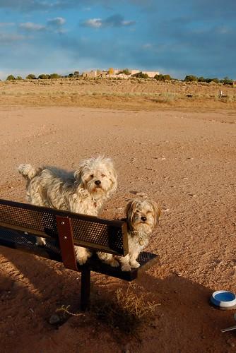 Dog Park Bench