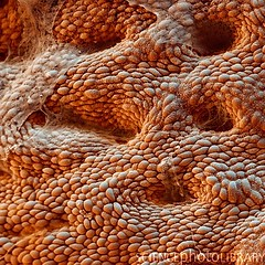 nanotectonica_max Magen Corpus 700x (Studio Jonas Coersmeier) Tags: architecture germany studio design jonas corpus medizin magen reutlingen verdauung coersmeier ventriculus