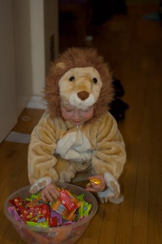 lion4