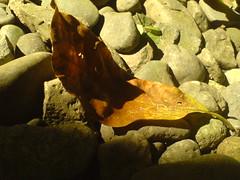pentimenti (* jdt... (shabba!)) Tags: walking lights leaf shadows stones philippines ground sunbeam notetoself lightplay jdt bookexcerpts articulateimages