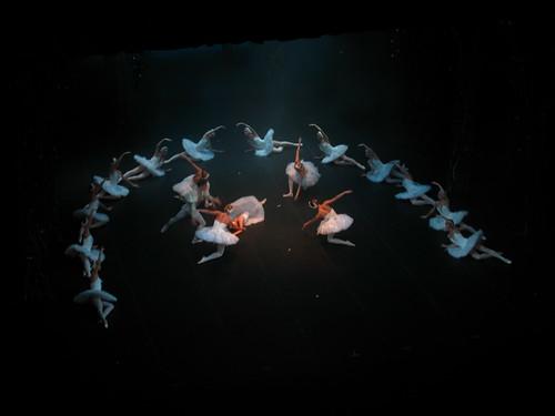 8382 - St Petersburg - Alexandrinsky Theater - Swan Lake
