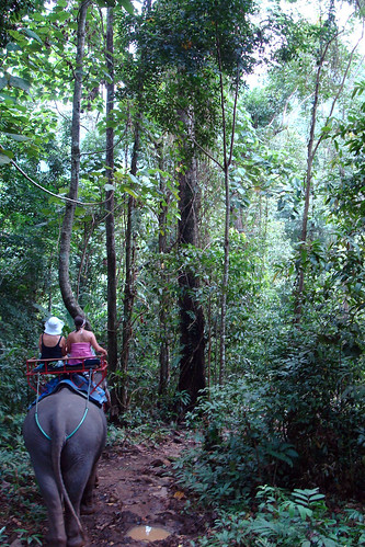 Rain Forest Trek
