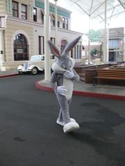 Movie World (phempsall) Tags: park white rabbit bunny grey costume gray australia qld queensland rides themepark warnerbros bugsbunny movieworld goldcoast warnerbrosmovieworld oxenford