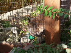 100_6074 (fkalltheway) Tags: lehighvalleyzoo fkalltheway animalsciencesociety