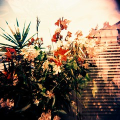 Gli arcobaleni d'altri mondi hanno colori che non so/ lungo i ruscelli d'altri mondi nascono fiori che non ho (Ilaria ♠) Tags: flower 6x6 mediumformat holga xpro mare doubleexposure crossprocess toycamera fiori squared doppiaesposizione medioformato toycamerafotografiaanalogicaitalia fujisensiaii100ra sviluppoinvertito