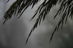 early morning (patrizia.lungonelli) Tags: canoneos300d naturesfinest veterinarifotografi dropsandfog