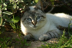 Sugar (vic_206) Tags: baby cute beautiful animal cat canon eos nice gato precioso catnipaddicts