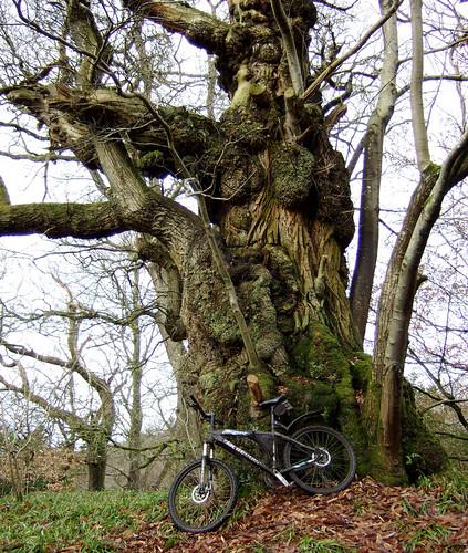 Grand old tree 15Feb09
