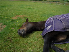 My horse sleeping