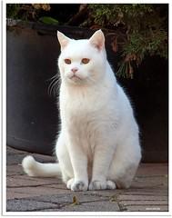 Besuch von Nachbars Katze - visit from the neighbor's cat
