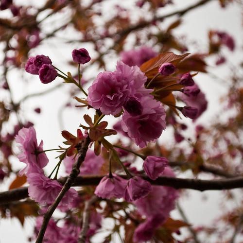 290410_ Blossom #3