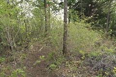 灌木に隠された道