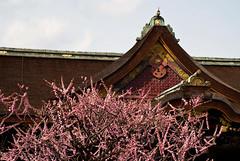 DSC_8446 (Alex Rowan) Tags: people plants flower alex japan kyoto asia rowan plumblossom kitanotenmangu   alexrowanphotography northernkyoto