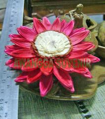 bunga matahari tanggung 1