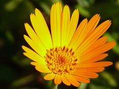everyday glory (p/g) Tags: orange flower macro purdy soe excellence cubism blueribbonwinner supershot golddragon somegreen mywinners mywinner platinumphoto anawesomeshot amazingshots diamondclassphotographer flickrdiamond citritgroup flowererotica theperfectphotographer excellentsflowers natureselegantshot mimamorflowers