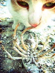 Jonesey and Face Hugger (marce_garal) Tags: pet macro face cat movie cool eyes alien crawfish crab textures tones facehugger cucha