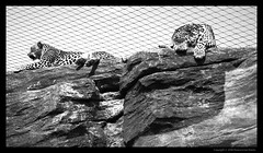 El nuevo zoo de Valencia - Bioparc