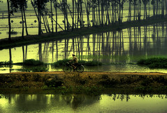 Compositionally Flawed (Su Inc) Tags: road travel sunset reflection tree bicycle rural landscape photography asia solitude cyclist rice paddy vietnam southeast hanoi paddies sonya100 fotocompetition fotocompetitionbronze
