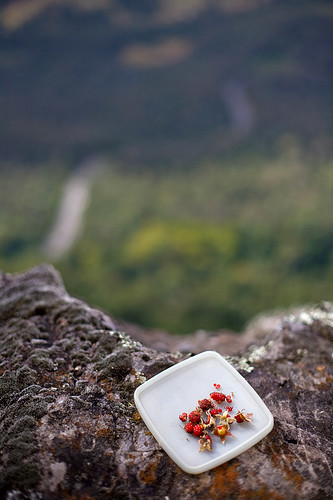 Wild Raspberry snacks