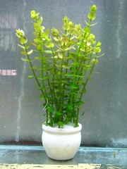 Thủy Sinh Tuấn Anh-Chuyên cây & Rêu Thủy Sinh, Cá Cảnh Biền & Hồ Cá Cảnh Biển - 9