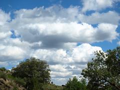 Algodones mgicos (rayo111) Tags: cielo nubes algodn
