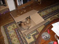 DSCN0484 (Voidious) Tags: cats cammy 4560