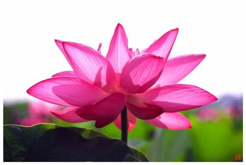 Lotus 20080712 #03