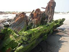 IMGP0192 (paulsyak) Tags: kayak lewes delawarebay beachplumislandshipwreck