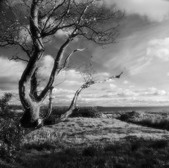 Winter Tree (Dan Baillie) Tags: tree scotland nikon portfolio winterlandscape dumfriesandgalloway d40 puddock wigtownshire danbaillie natureandnothingelse bailliephotographycouk bailliephotography wigtownshirephotographer dumfriesandgallowayphotography
