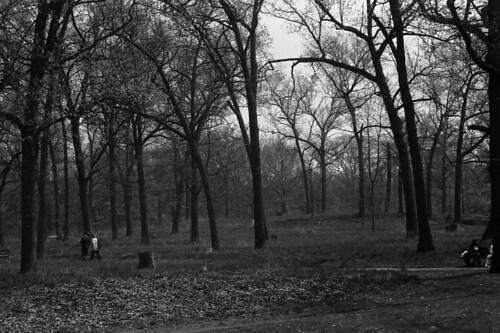 High Park Noir