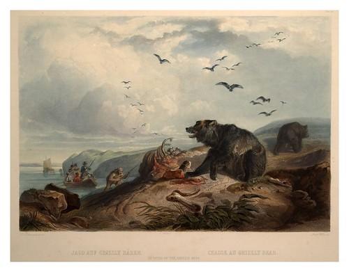0069r- La caza del oso gris