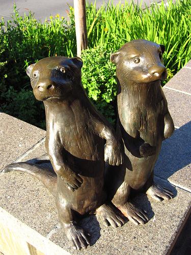 bronzeotters