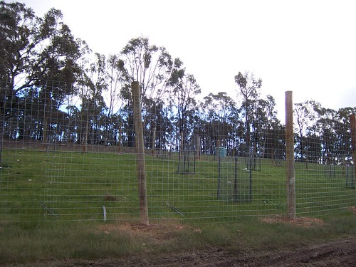 olive grove fence - 2