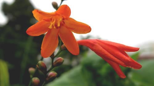 09.陰天的花朵