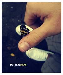 borboletas no estmago (Matteus Oberst) Tags: