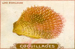 coquillages10
