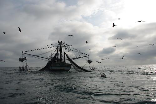 Une partie de pêche à haut risque