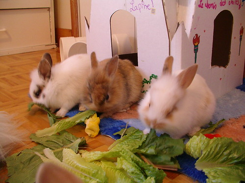 baby rabbits eating together; ← Oldest photo