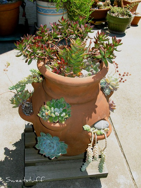 Did I ever show you this pot?