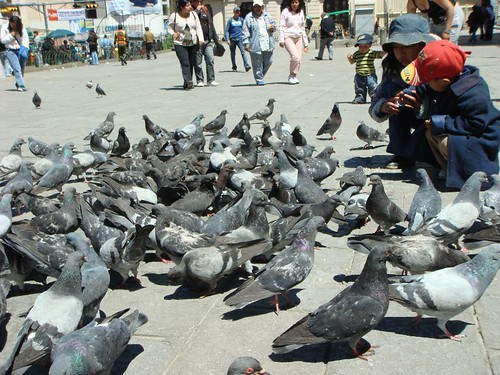 Pigeon feeding in La Paz.