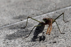 I know (dr.snitch) Tags: shadow animal bug mantis insect shadows praying creature prayingmantis portatrait
