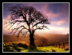 Morning glow II (Peter Ribbeck) Tags: sunlight tree scotland contrejour ayrshire westkilbride aplusphoto