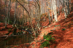 Red Forest (Pavel Pronin) Tags: autumn mountains river waterfall bulgaria   karlovo staraplanina centralbalkan  balkanmountains  panparks  centralbalkannationalpark starareka stararekareserve