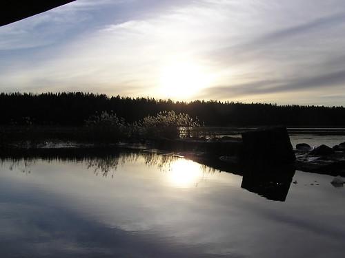 Kaislikko sillan alta aurinkoa vasten