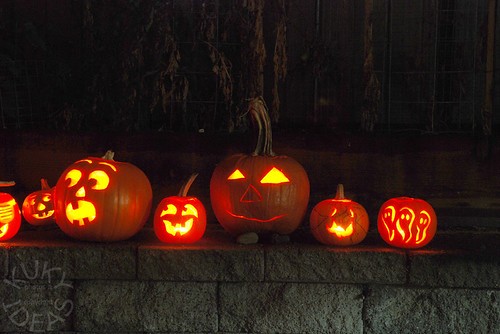 Pumpkin line up - Close up 1
