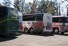 Tour Buses at Waimea Canyon Lookout