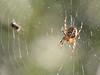 intruder (1600 Squirrels) Tags: macro spider photo lenstagged web 1600squirrels xsi 4x3 canon70300f456 450d