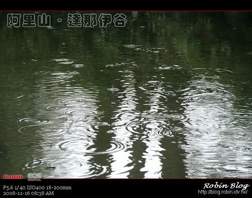 你拍攝的 20081116數位攝影_阿里山之旅113.jpg。