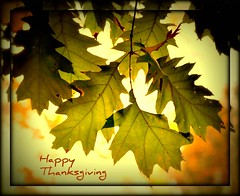 Happy Thanksgiving (Tracey Tilson Photography) Tags: thanksgiving holiday nature leaves oak nikon northcarolina marion blessing explore thankful 2008 2009 soe picnik happythanksgiving d90 bethankful natureselegantshots