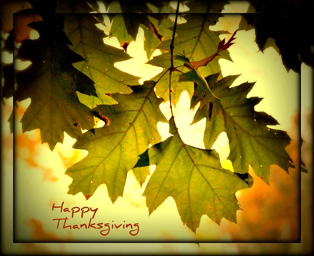 Thanksgiving Day Backgrounds